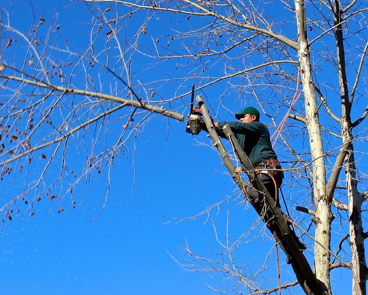 Baumabtragung mit Briechle Baumpflege