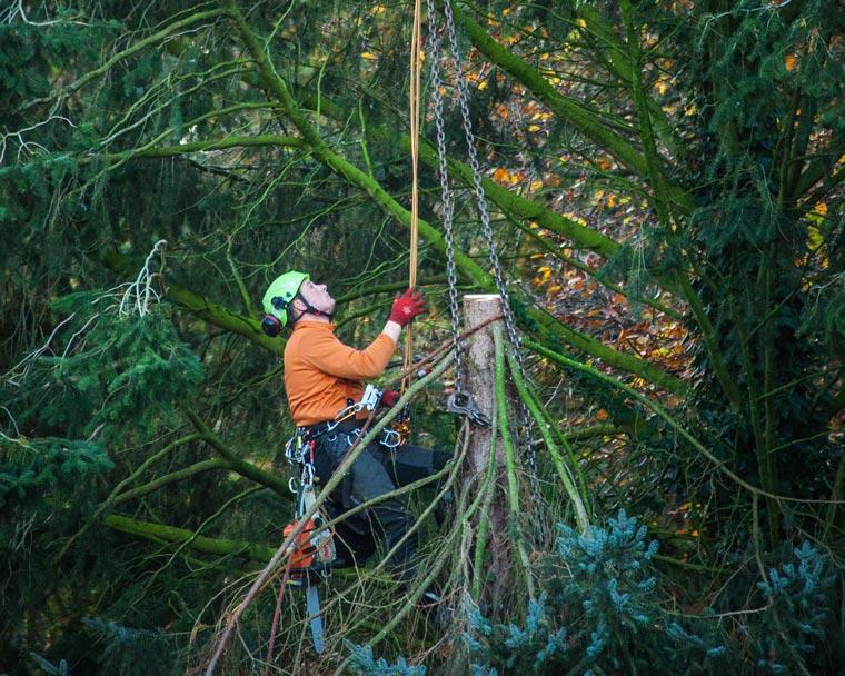 Buschwerkrodung von Fachmännern aus Altusried